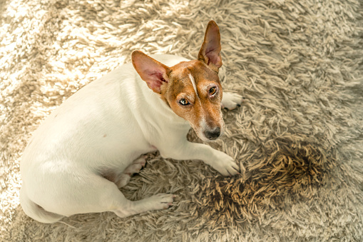 Pet stain and odor removal